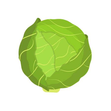 Cabbage vegetable natural diet nature symbol vector icon flat. Green farm plant harvest ingredient food. Kale leaf salad