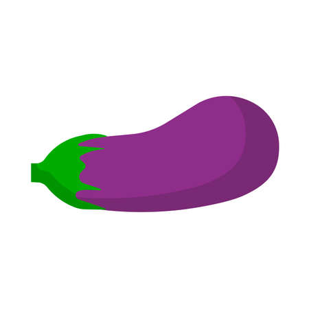 Eggplant vegetarian nature ripe ingredient violet. Flat food vector icon isolated. Vegetable farm plant agriculture
