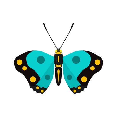 Butterfly top view vector decoration wildlife wings icon. Illustration shape insect exotic cartoon above