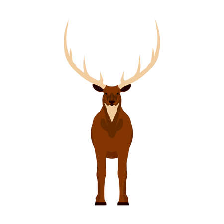 Elk vector illustration icon front view. Wildlife deer mammal art nature with horn. Antler head cartoon forest fauna zoo