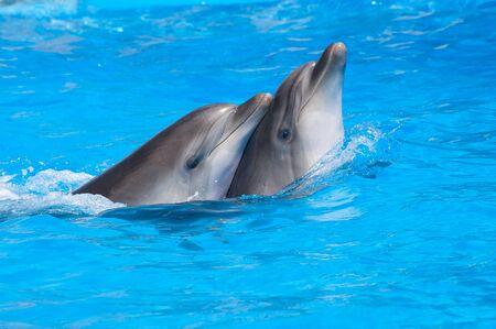 dauphin: Piscine dauphins Banque d'images