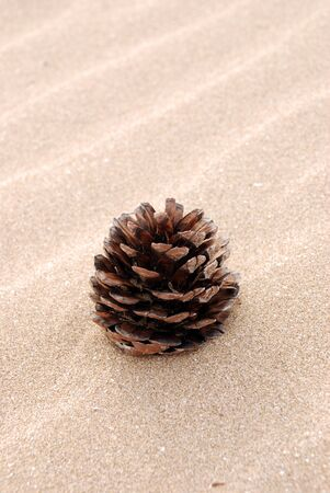 Pine cone on beach Stock Photo