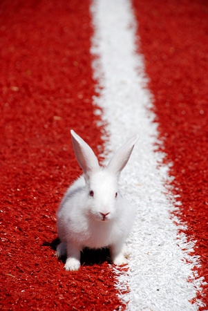 White rabbit ready to run Stock Photo