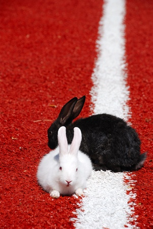 two rabbits on a racetrack