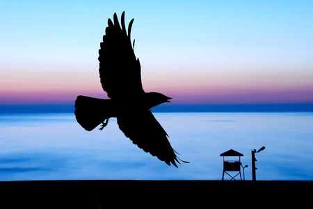 Sunset and crow photo