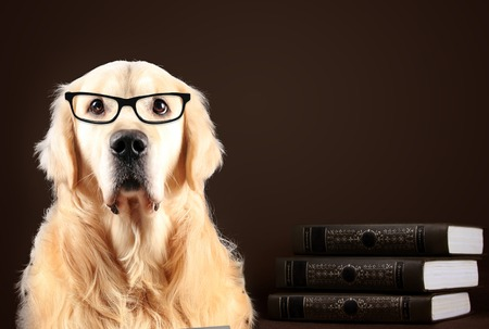 Golden Retriever dog in glasses sitting on black background with books