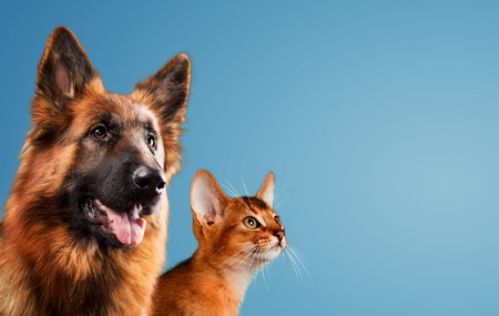 Dog and cat together on blue background Stock Photo