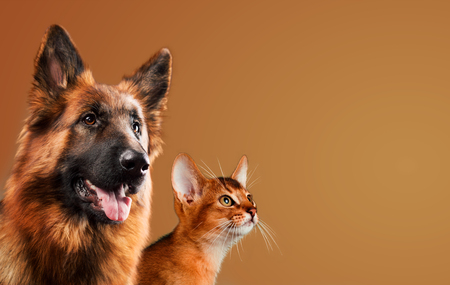 Dog and cat together on brown background