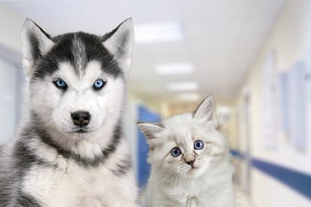 Mascotas en la clínica veterinaria. Perro y gato delante del fondo borroso del hospital. Foto de archivo - 83940955