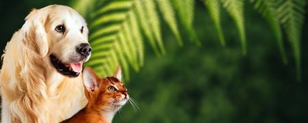 Gato y perro, gato abisinio, golden retriever juntos sobre fondo verde natural. Buen concepto para representar alimentos saludables o vitaminas para mascotas.