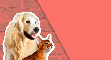 Cat and dog, abyssinian kitten , golden retriever looks at right in front of bright brick wall. Cartoon zine retro style Stock Photo