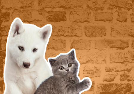 Cat and dog looks at right in front of yellow brick wall. Cartoon zine retro style