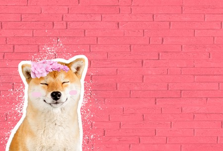 Happy smiling shiba inu dog in front of pink brick wall, funny cartoon zine style