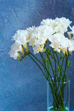 Bouquet of beautiful white freesias on blue background. Stock Photo