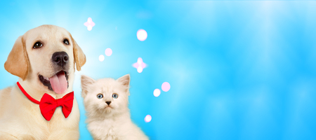 Cat and dog together on bright light blue background, neva masquerade, golden retriever with sparkles, cheerful party mood.