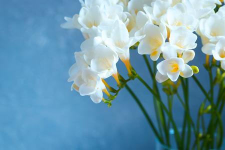 Bouquet of beautiful white freesias on blue background. Reklamní fotografie