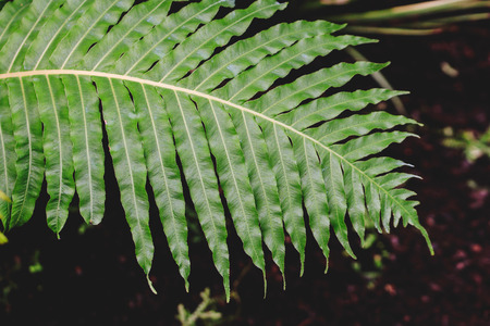Close up view of green fern. Blurred background.Texture for wallpaper or web banner