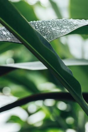 Close up portrait of beautiful plants in botanical garden Reklamní fotografie
