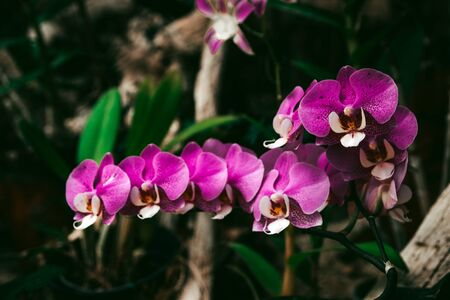 Close up portrait of beautiful flowers, Orchid in the Botanical Garden, Orchidaceae.