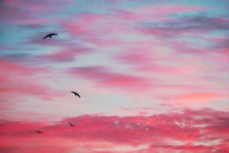 Morning birds. Reklamní fotografie