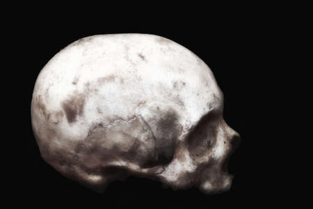 Real human skull on an isolated black background. Stock Photo