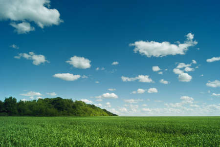 agrarian: Russian space. The green fields of the Saratov region under the blue sky and beautiful clouds.