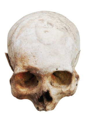 Real human skull on an isolated white background. Stock Photo