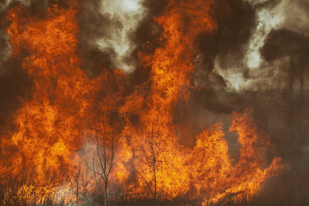 The raging flame of fire burn in the fields, forests and black thick acrid smoke.