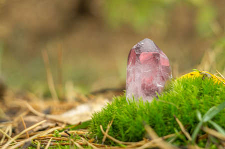 Rose quartz. Pink large crystal gemstone close-up on a background of moss and autumn nature Archivio Fotografico