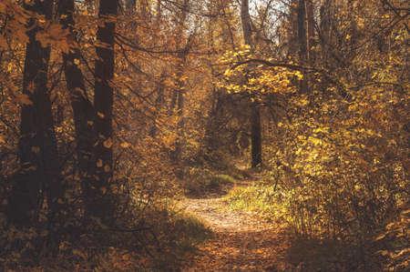 Herbstpfadweg im malerischen malerischen Wald. Stimmungsvolle Herbstlandschaft Standard-Bild
