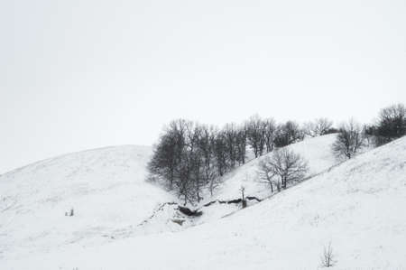 Gray trees on the white winter hills. Wildlife of the remote corners of Russia