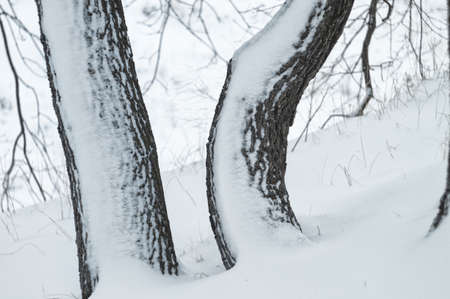 Wild beauty of the winter nature of rural Russian remote places. Bushes shrubs and tree branches in the snow