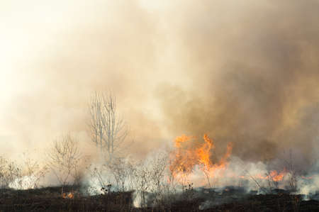 Autumn fire in the fields in the wild. Fire and smoke close up burning fields and forests