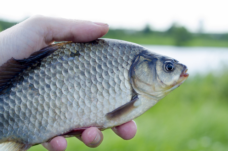 Catch fresh fish from the morning fishing on a lake in summer Stock Photo