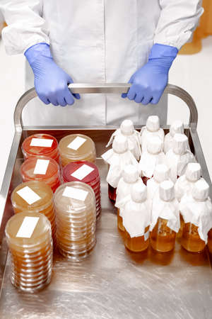 collecting plate with culture medium stored in a laboratory. A lot of petri plates. Laboratory research concept