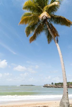 Coconut palm on the Caribbean beach Archivio Fotografico