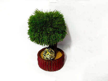 Tree miniature, often decorated in buddhism as it resembles bodhi tree 写真素材