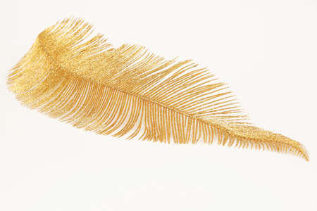 Golden christmas feather isolated on white background Stock Photo