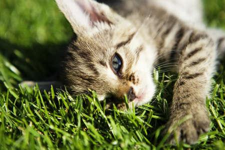 Kitten on beautiful green grass taken by macro Stock Photo