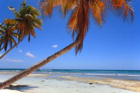 Tropical beach at Punta Cana, Dominican Republic