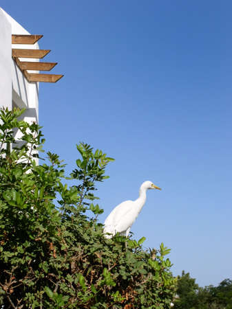 standing White bird and white house blue sky photo
