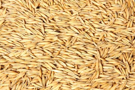 A Texture of oats seeds