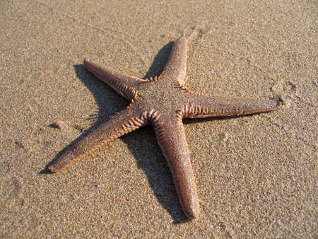 Starfish on sandy beach. Mediterranean Sea Stock Photo - 4903808