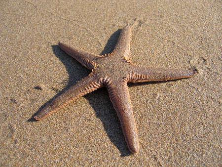 Starfish on sandy beach. Mediterranean Sea Stock Photo - 4903808