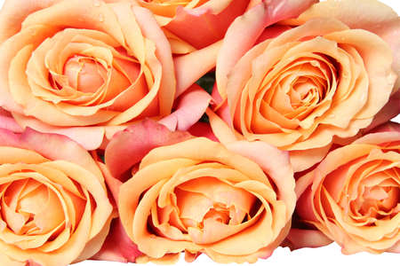 Rose Bouquet in Pastel Color. Isolated on white photo