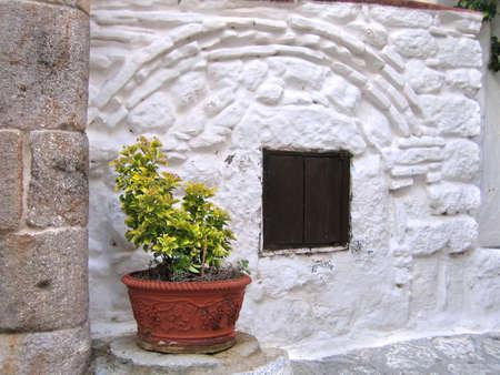 greek pot: Euonymus Bush nella pentola di fronte ad una casa tradizionale greco