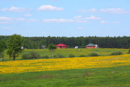 Rural landscape - forest, village and field of dandelions Stock Photo - 5210201