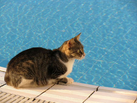 Cat on the edge of swimming pool Stock Photo