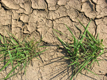 seca: Cracked Earth and green grass. Dried Ground Texture