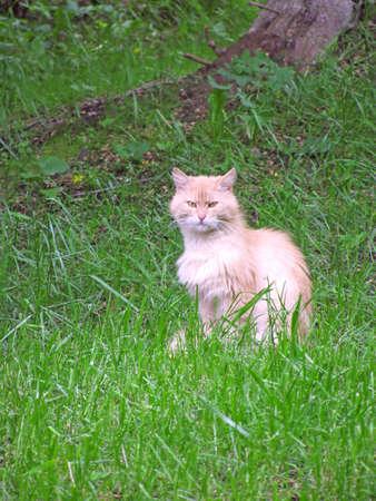 Beige cat in the grass photo
